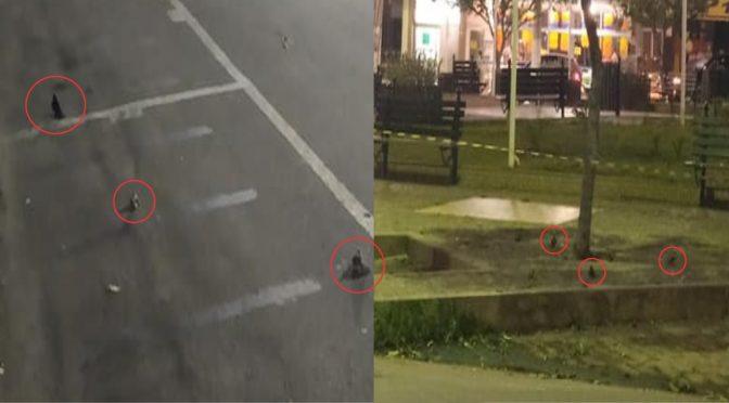 Morte de andorinhas causa suspeita de envenenamento, Prefeitura de Pádua emite nota sobre o caso
